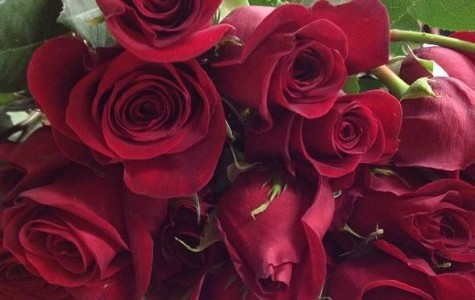 Homecoming Rose Sale to Start Sept. 15